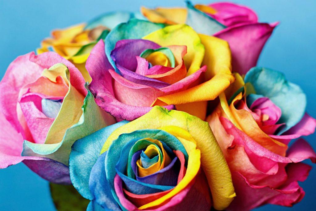 3.1_-raduzhnye-rozy