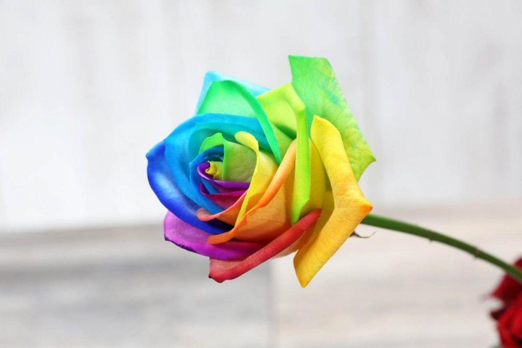 3.3_-raduzhnye-rozy