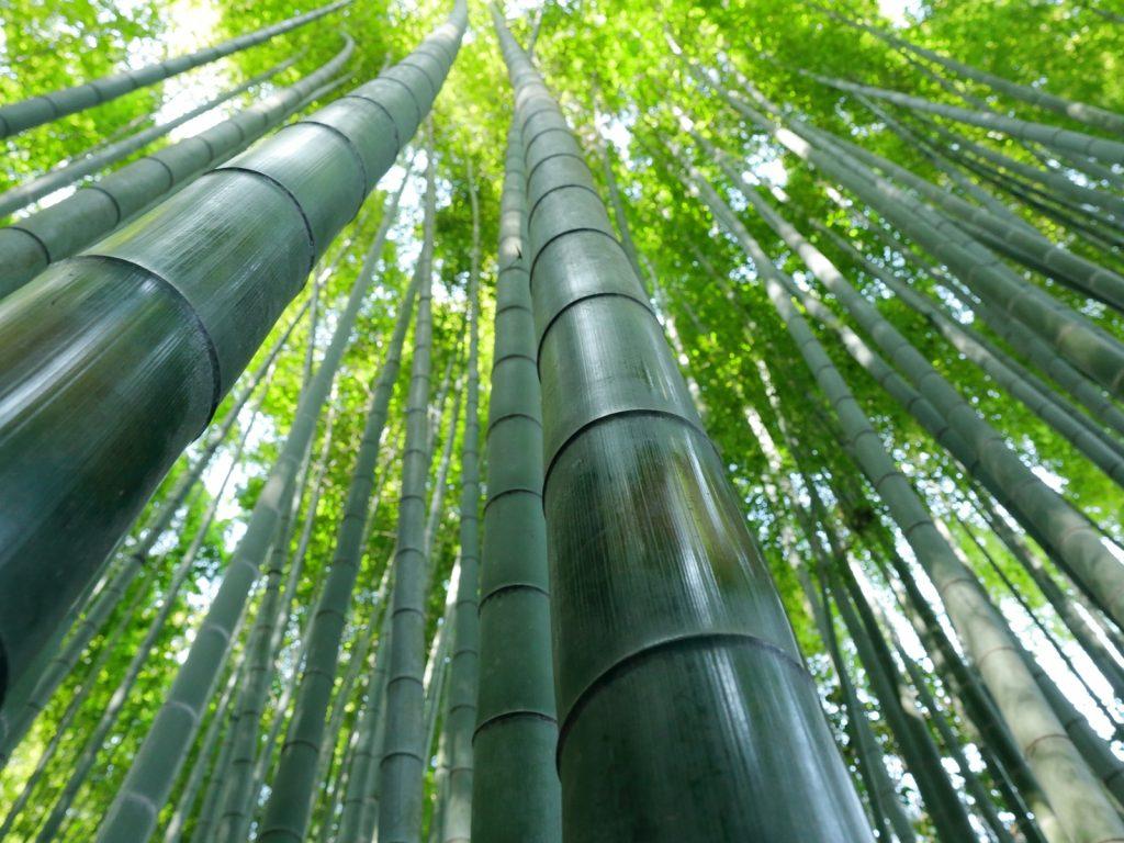 1_bambuk