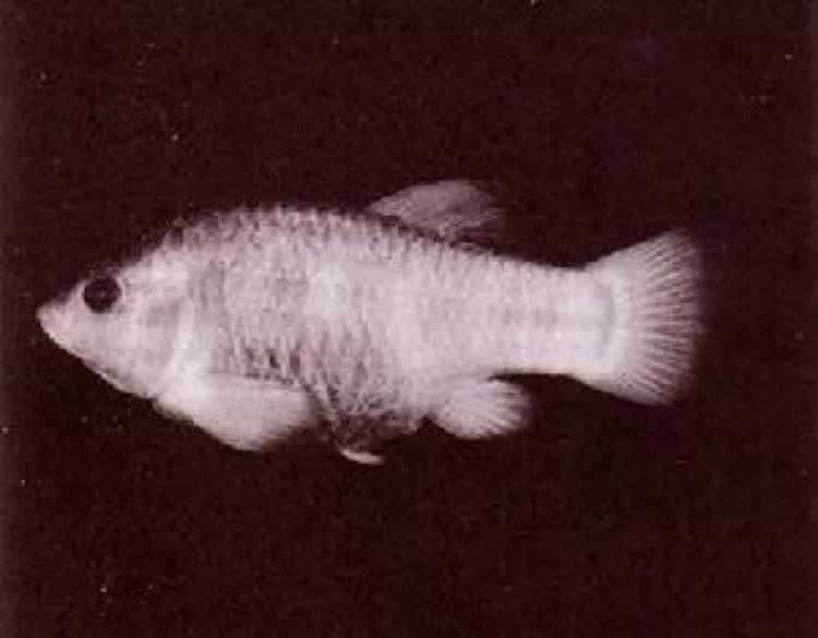 1_ryba-tekopa