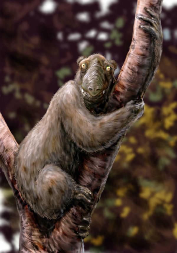 32.2_koalovye-lemury