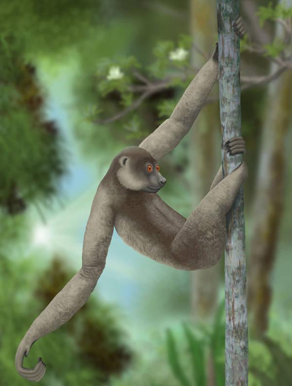 3_bolshoj-lenivczevyj-lemur