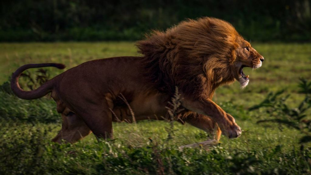 14_lev-panthera-leo-samoe-agressivnoe-zhivotnoe-v-mire