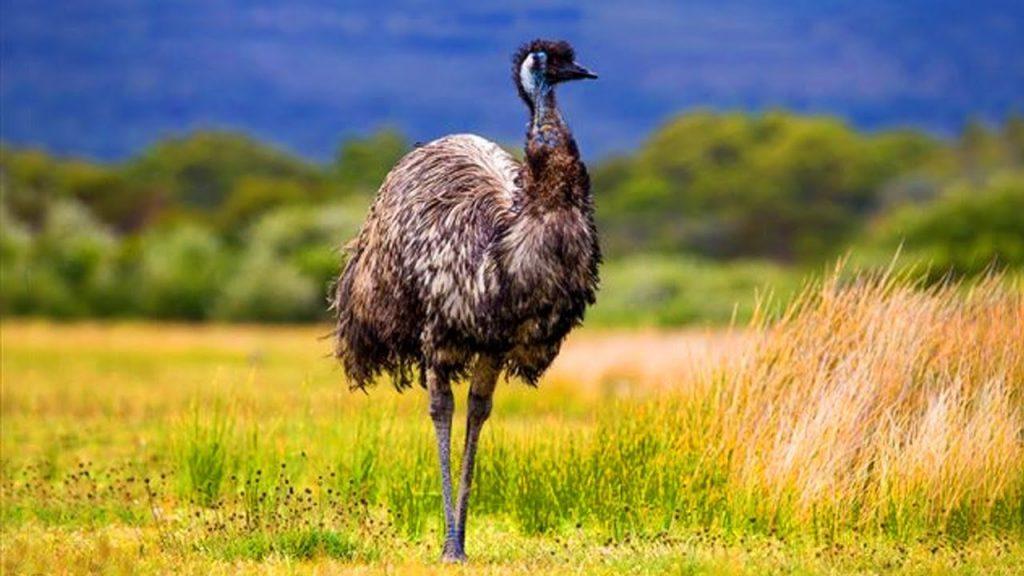4_emu