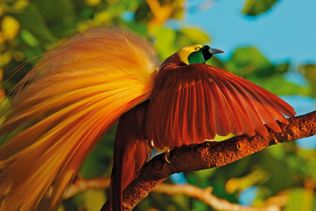 10_bolshaya-rajskaya-pticza