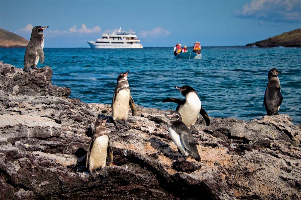 10_galapagosskij-pingvin