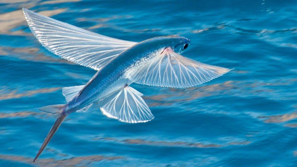 10.-letuchaya-ryba