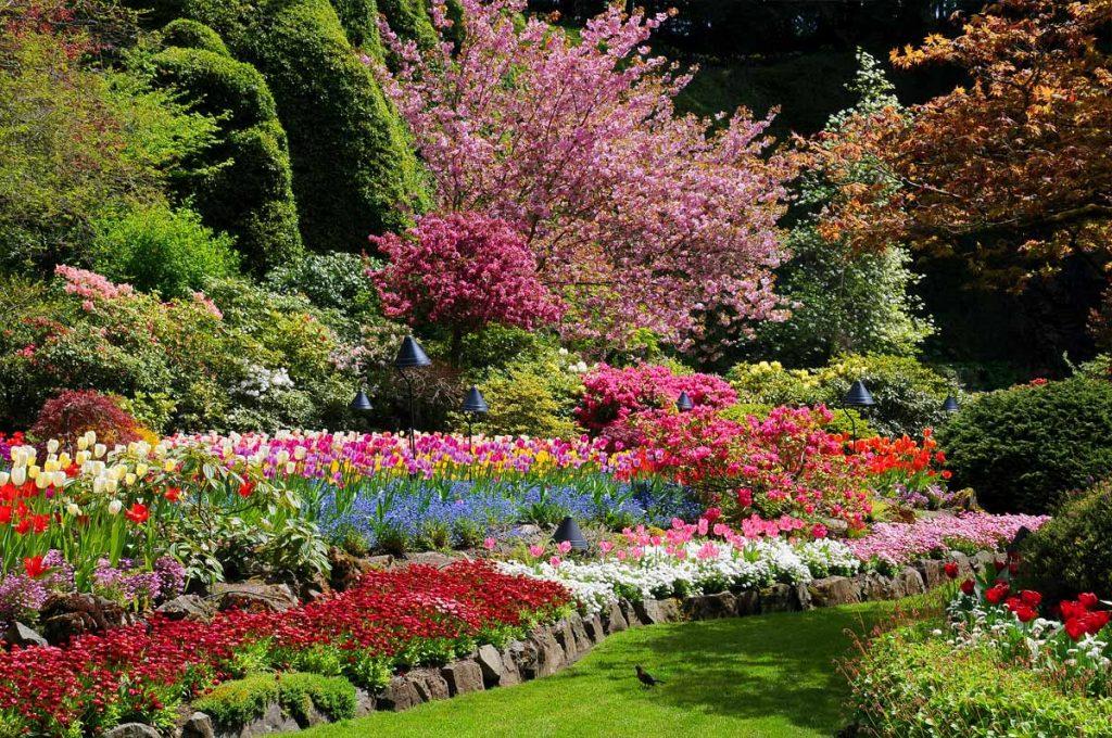 28_sady-burchatov-butchart-gardens
